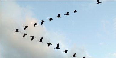 Formación de pájaros en V